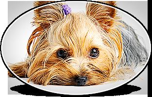 HÔTEL CANIN LA BOISERIE - Pension chien